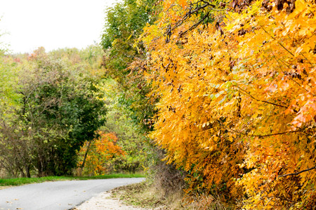 A yellow leafed tree with a road next to it Stock Photo