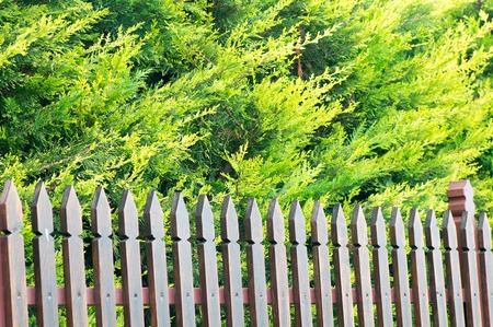 Wooden made fence with a green bush in the background Stock Photo