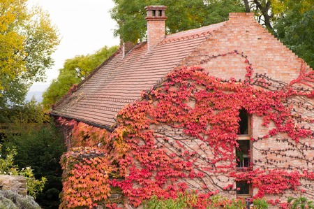 Brick built house with creeper plant on it