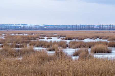 Landscape photo with ponds and reed