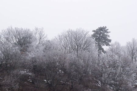 Trees in show and hard rime