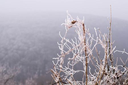 Hard rime on a dry tree Stock Photo