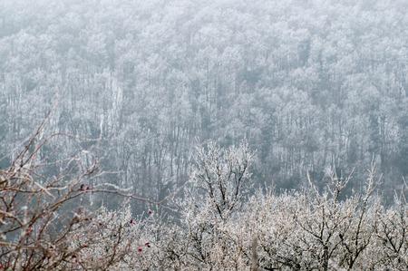 Landscape shot of a frozen forest