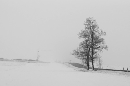 Tall tree standing next to a road in foggy weather