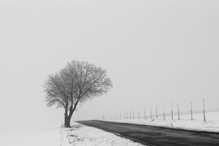 Lonely tree in fog next to a road Stock Photo