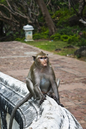 A female monkey sits on abbeys wall. photo