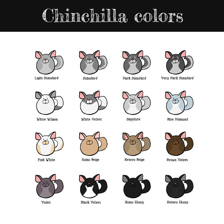 Set Of Some Common Chinchilla Colors Hand Drawn Chinchillas