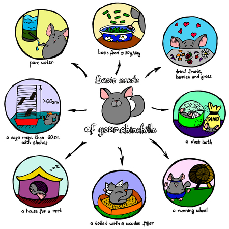 A visual and colorful scheme of basic chinchillas needs, hand drawn vector illustration. Ilustração