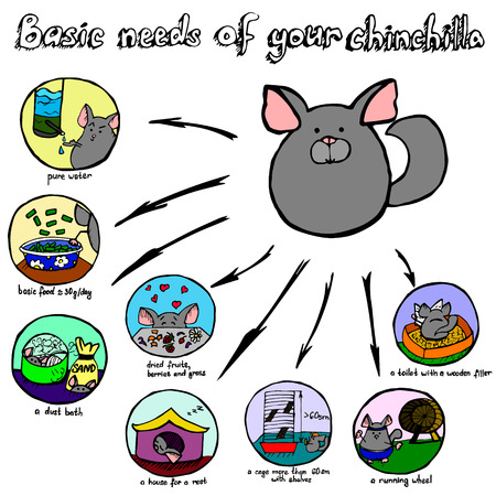 basic scheme: A scheme of basic needs of a pet such as a chinchilla. What you need to know about keeping of these animals.