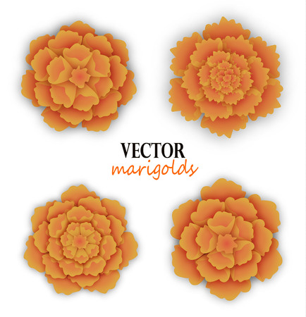 Set of orange marigolds