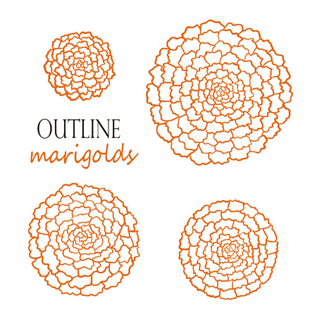 Set of four outline orange marigolds Illustration