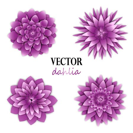 Light lilac dahlias collection.