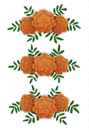Marigold flower design elements. Corners and line. Vector illustration isolated on white