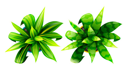 Vector Dracaena and Sansevieria isolated on white