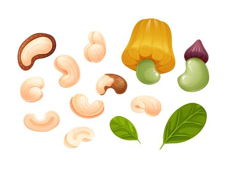 Cashew set, different rotations, raw and hulled Çizim