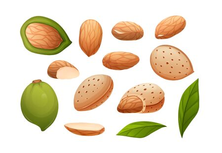 Almond nut set. Different statements and rotations