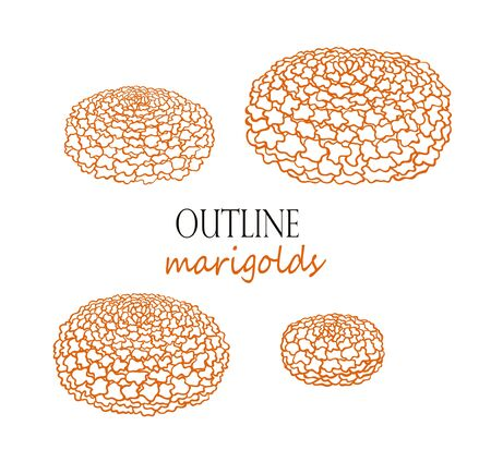 Outline marigolds, quarter view. Traditional flowers. Isolated vector objects on white background Çizim