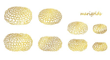 Outline golden marigolds set, quarter and side view. Traditional flowers. Isolated vector objects on white background