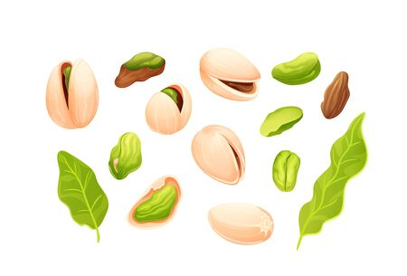 Pistachios nut set. Different statements and rotations. Whole and cracked nuts, hulled and raw kernels. Constructor for designing. Vector isolated objetcs in cartoon style on white bakground