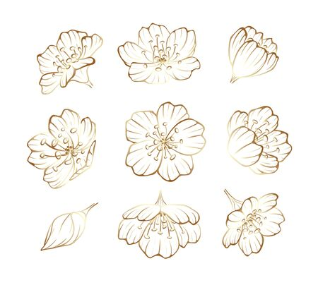 Golden outline sakura flowers, cherry blossom. Metallic line, decoration for greeting cards, wedding, posters and flyers. Vector illustration isolated on white