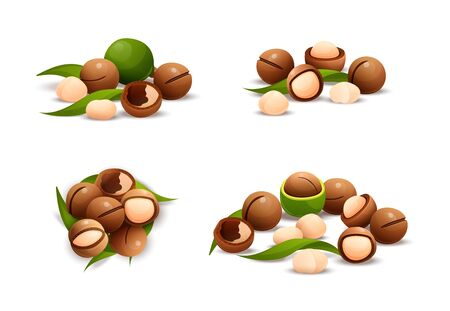 Macadamia compositions nut set, different statements and rotations. Australian nut, healthy food. Whole and cracked nuts, hulled and raw kernels. Constructor for designing. Vector illustration in cartoon style, objects, isolated on white