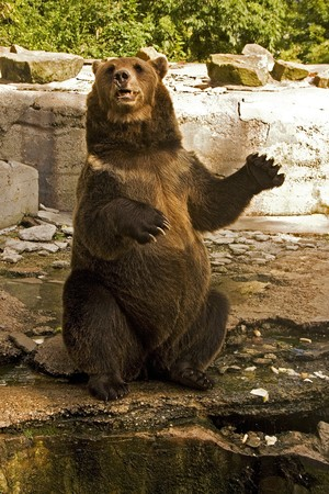 bear iz zoo photo