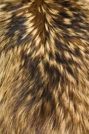 animal skin: brown,black and white animal fell texture Stock Photo