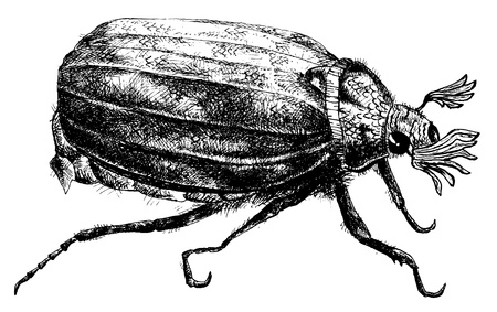 marco: detailed bug pencil drawing style, vector