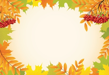 ashberry: abstract autumn background with maple leaves and rowanberry vector Illustration
