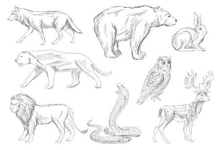 wild animals vector set Vector