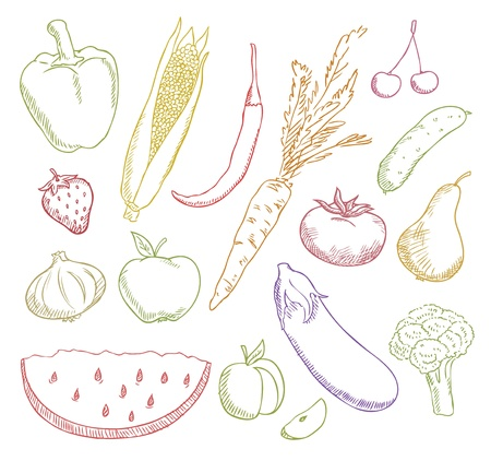 multicolored fruits and vegetables  Vector