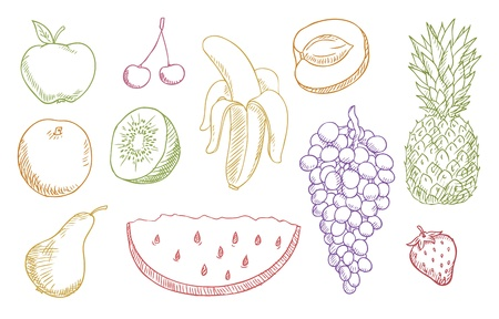 multicolored fruits  Vector