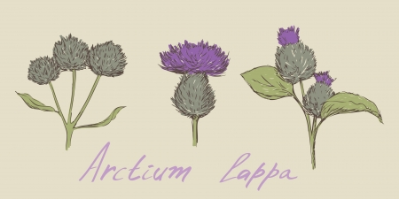 burdock hand drawn set
