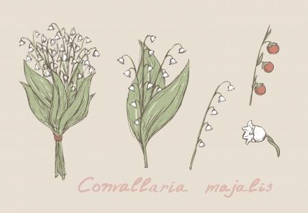 dessin fleur: lys de la main vall�e �labor� ensemble Illustration