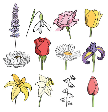 many different flowers color vector collection Vector