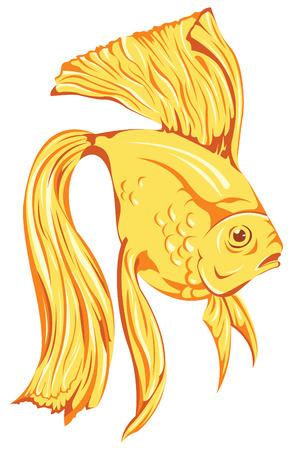 gold fish bowl: beautiful golden fish vector Illustration