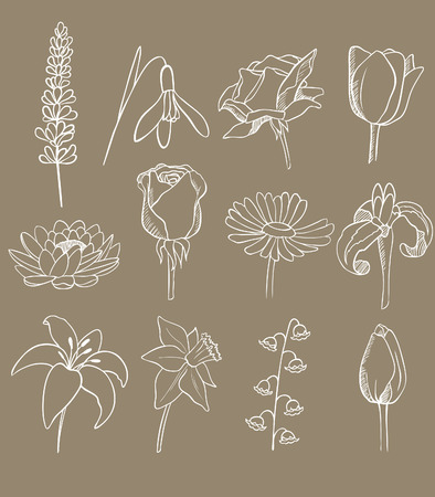 lily flowers collection: many different flowers vector collection