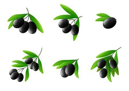vegetable cook: Black olives on branch vector set Illustration
