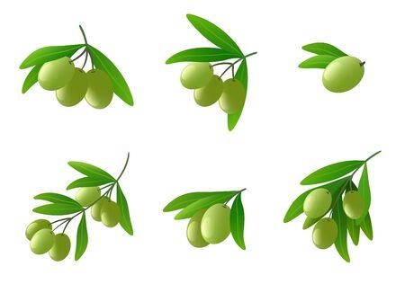 vegetable cook: Green olives on branch vector set Illustration