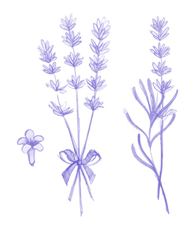 Purple lavender flowers vector hand drawn