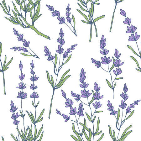 lavender seamless pattern vector Illustration
