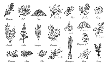 kitchen herbs and spices, vector doodle sketch