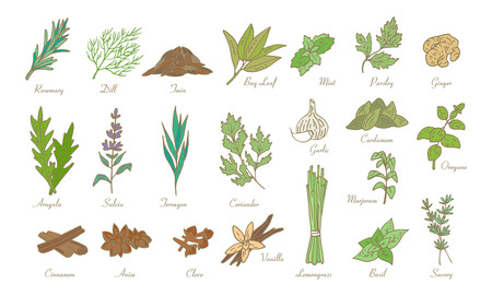 Kitchen herbs and spices, vector doodle sketch set Illusztráció