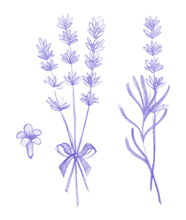 Purple lavender flowers vector hand drawn set. Illusztráció