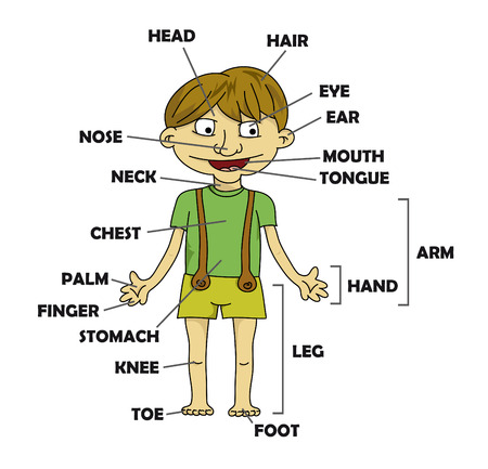 vocabulary: Cartoon boy - parts of body  vector   Illustration
