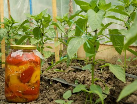 Peppers in jars and nursery Stok Fotoğraf