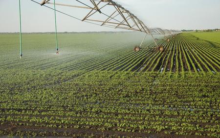 Sprinkler system crops