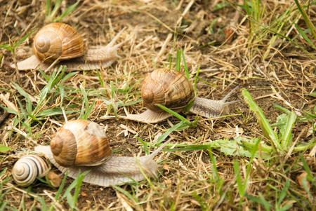 slithery: Race snails