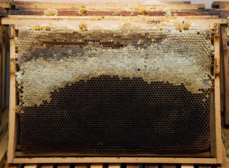 Beekeepers frame prepared for extraction of honey