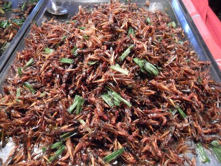 Fried insect  in market fair